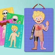 木质人体奥秘认知磁性贴幼儿园小学生男女孩早教益智拼图儿童玩具