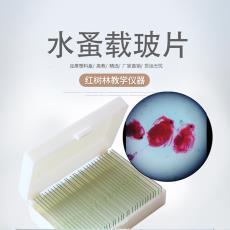 生物切片 熱銷教學實驗室用切片標本結構清晰染色鮮艷水蚤裝片